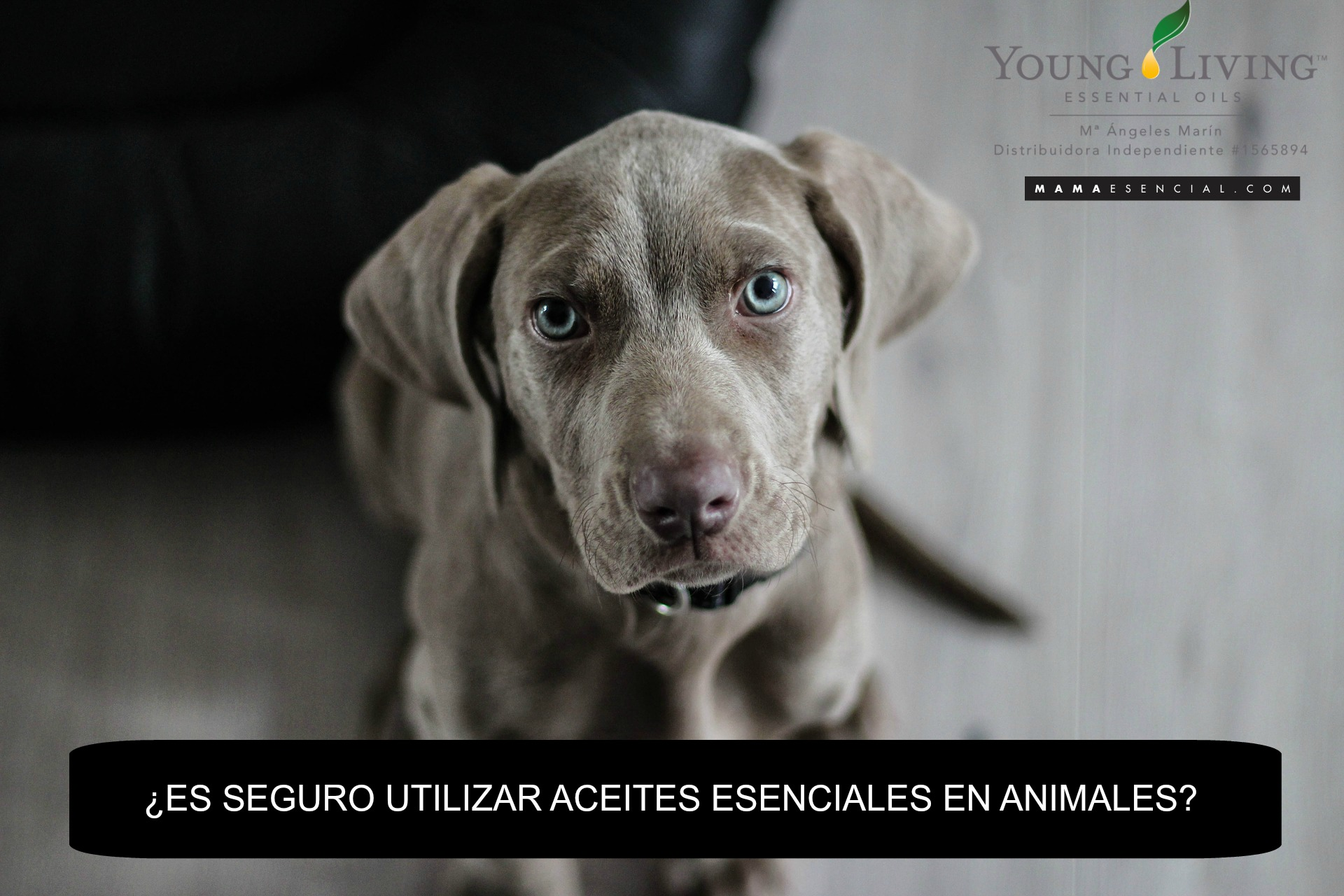 Es seguro utilizar aceites esenciales en animales