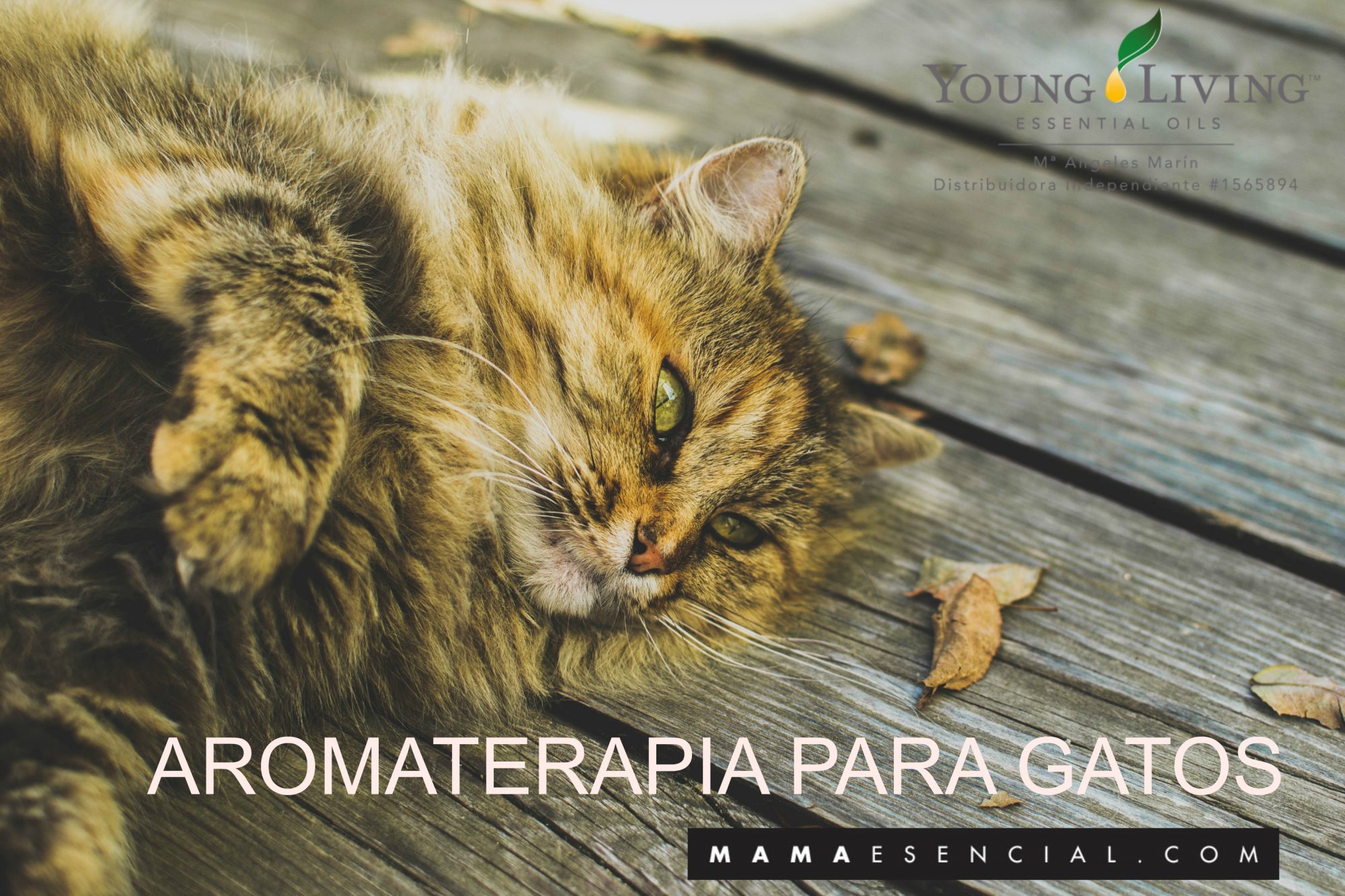 Aromaterapia gatos