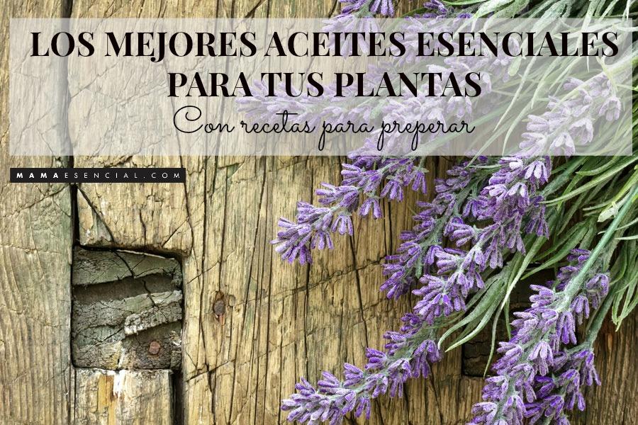 LOS MEJORES ACEITES ESENCIALES PARA TUS PLANTAS